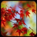 唯美枫树动态壁纸