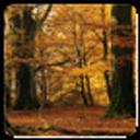 秋天的枫叶动态壁纸