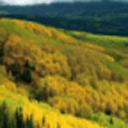 世界最美森林动态壁纸