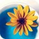杯中的唯美小葵花