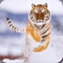 老虎记忆游戏