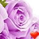 紫玫瑰花语魔秀桌面主题(壁纸美化软件)