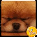 YOO主题-Lovely 犬犬