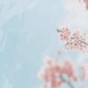 GO主题-淡梅花
