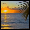 日落附近的棕櫚樹