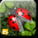 甲壳虫跳跃