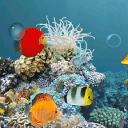 3D水族馆动态壁纸