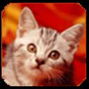 乖小猫第二辑主题壁纸