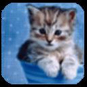 超可爱小猫咪第四辑主题壁纸