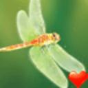 蜻蜓桌面主题—魔秀