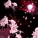 GO桌面-浪漫樱花温馨版主题