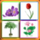 儿童教育之识植物