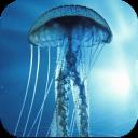 3D立体水母动态壁纸 3D Jellyfish Live Wallpaper