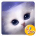 YOO主题-灵动猫咪