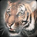 3D老虎静态壁纸 3D Tiger