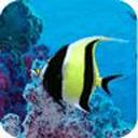 海底總動員動態壁紙