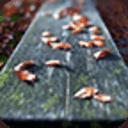 寶軟3D主題-板凳上的枯葉