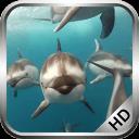 海豚的視頻動態壁紙