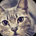 宝软3D主题-小猫抬头