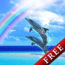 彩虹海豚动态壁纸