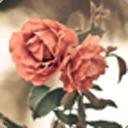 玫瑰盛开-宝软3D主题