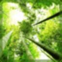 竹叶飘落动态壁纸