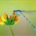 可爱昆虫高清动态壁纸