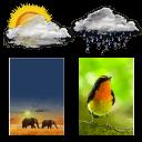 真实天气动态壁纸 动物世界
