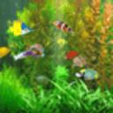 养鱼动态壁纸
