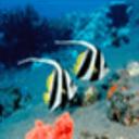 最美海底世界高清拼图