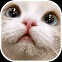 猫相册安卓