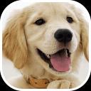 小狗相册手机版安卓软件