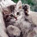 超萌猫咪动态壁纸 個人化 App LOGO-硬是要APP