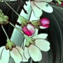 GO主题-花梦