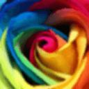玫瑰-主题壁纸