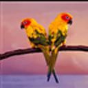 小鳥天堂動態壁紙