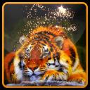 老虎和魔术动态壁纸
