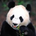 可爱熊猫主题动态壁纸