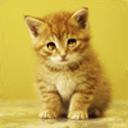 可爱猫咪主题动态壁纸