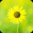 像向日葵一样灿烂-宝软3D主题