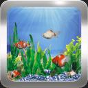 3d金鱼免费动态壁纸
