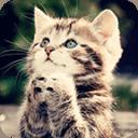寵物搞笑圖片大集合 萌宠趣图