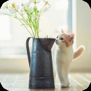 猫咪下午茶-宝软3D主题