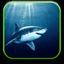鲨鱼控专属区域