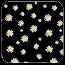 白菊花-91桌面主题壁纸美化