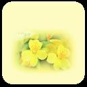 花儿-壁纸主题桌面美化
