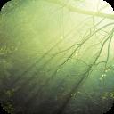 绿光森林-宝软3D主题