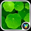 清新自然绿色浮萍动态壁纸