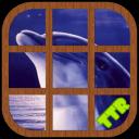 海豚 滑动 谜