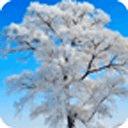 浪漫雪景动态壁纸